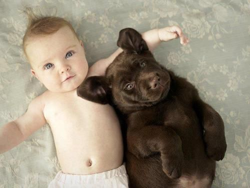D'awww~! So cute! xD: Labrador Puppys, Best Friends, Dogs, Sweet, Friendship, Children, New Baby, Chocolates Labs, Kid
