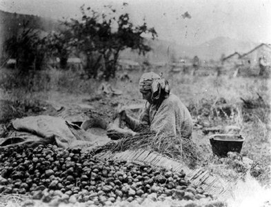 Palouse woman processing Camas roots