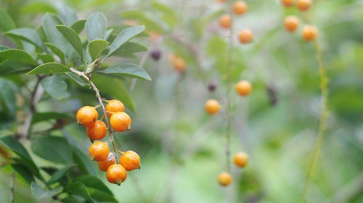 Vitamin ve Mineral Deposu: Altın Çilek