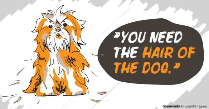 Funny Phrases: The Hair of the Dog - Also read the interesting comments!