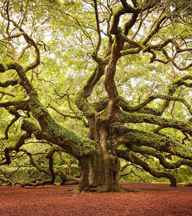 les 1224 meilleures images du tableau arbres sur pinterest for ts les arbres et arbres d 39 automne. Black Bedroom Furniture Sets. Home Design Ideas