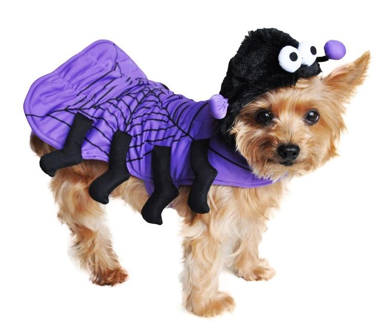 Irresistably Cute.. Isty Bitsy Purple Spider Costume for Dogs who love dress up fun