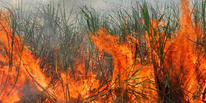 Audiência Pública Meio Ambiente com o tema 'Queima da Palha da Cana de Açúcar' - http://projac.com.br/noticias/audiencia-publica-meio-ambiente-tema-queima-palha-cana-acucar.html