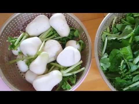 (밑반찬  황금레시피) 총각김치  맛있게  만들기 !/Ponytail   radish   Kimchi  recipe !/Jm의  키친 J - YouTube
