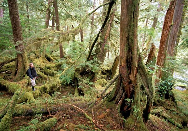 Haida Gwaii - Queen Charlotte Islands, British Columbia
