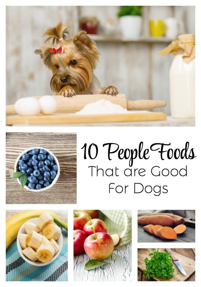 10 People Foods That Are Good For Dogs The Everyday Dog Mom