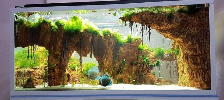 Cool aquascape | Aquarium, Fish tank, Pets