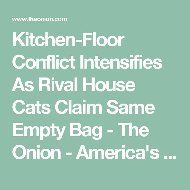 Kitchen-Floor Conflict Intensifies As Rival House Cats Claim Same Empty Bag - The Onion - America's Finest News Source