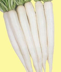 Daikon is is root vegetable said to have originated in the Mediterranean and brought to China for cultivation around 500 B.C. Roots are large, often 6 to 20 inches long. There are three distinct shapes - spherical, oblong and cylindrical. Radishes have been developed in the Orient which develop very large roots, reportedly up to 40 or 50 pounds, and with leaf top spreads of more than 2 feet Most of the commonly available Chinese radishes are white, but some are yellowish, green or black.