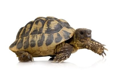 How to Care for a Turtle thumbnail