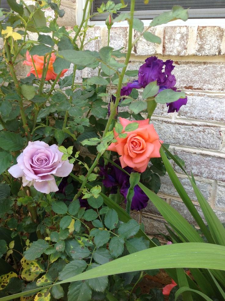 63 Best Low Maintenance Sun Plants For North Texas Images