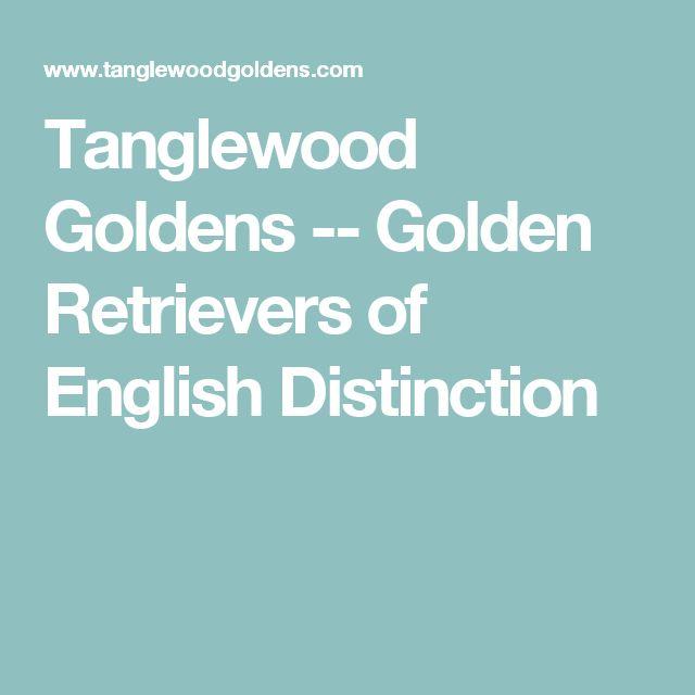 Tanglewood Goldens -- Golden Retrievers of English Distinction