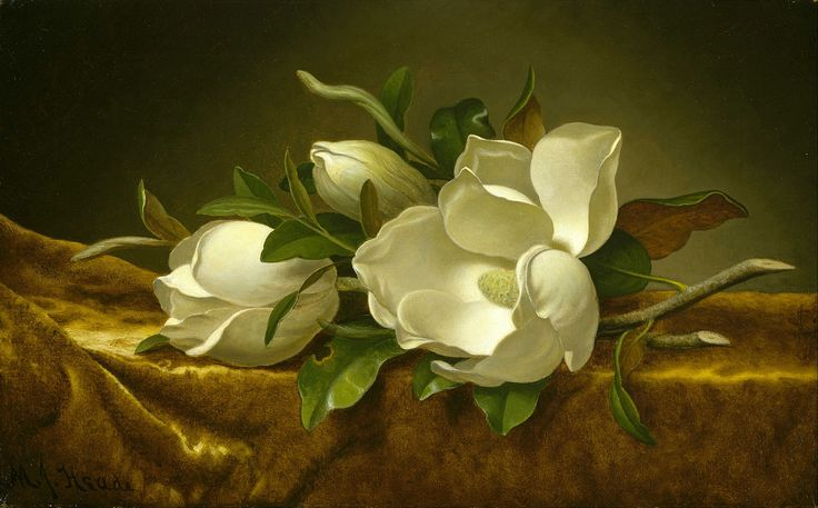 """""""Magnolias on Gold Velvet Cloth"""" by Martin Johnson Heade, Completion Date: 1890."""