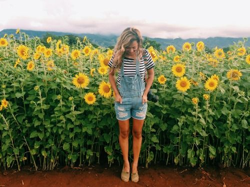 Best 25+ Sunflower Fields Ideas On Pinterest