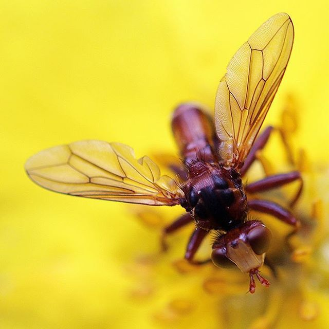 #macrophotography #macrolife #fly #bug #insect #photography #canon #canonphotography