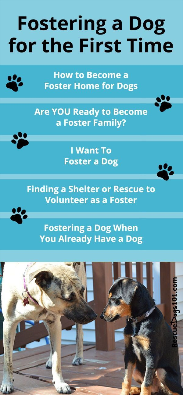 How To Foster A Dog Dog Boarding Facility Dog Grooming Dog Boarding