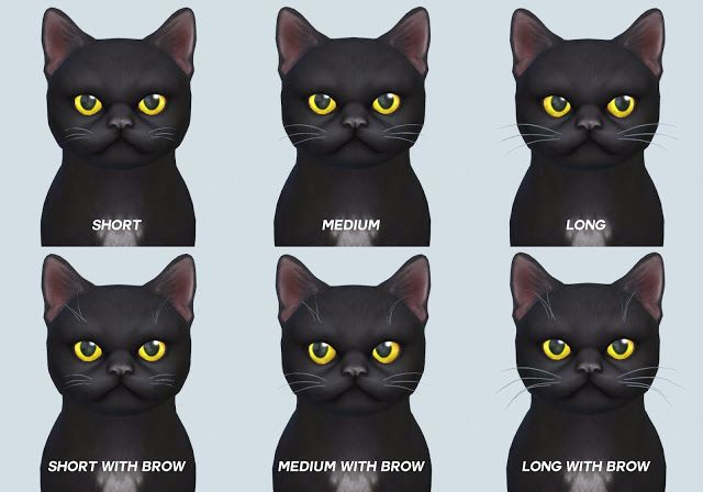 Pickypikachu Skinny Cat Whiskers And Brows Non Default And Default Sims 4 Pets Sims Pets Cat Whiskers