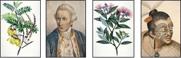 The Meaning of Trees | The history, use and significance of New Zealand's native flora