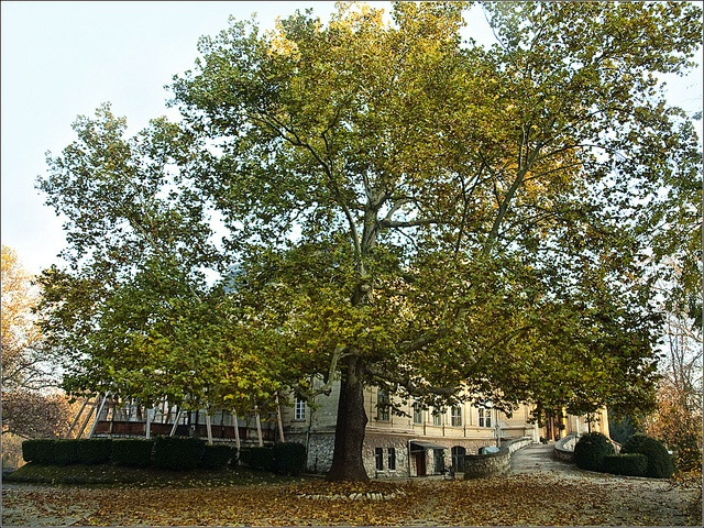 One of my most favorite trees. In Toalmas, Hungary.