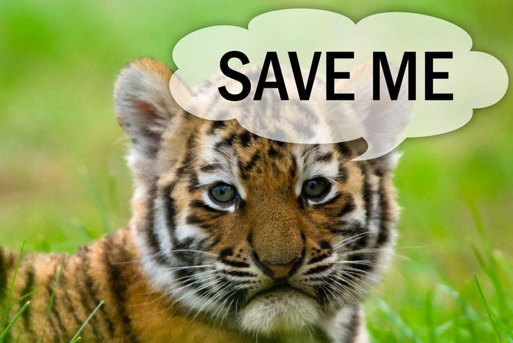 Save our wildlife essay