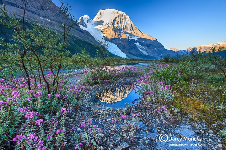 A Photographers' MOUNT ROBSON ~ If there is a backpack in the Rockies that could be called a pilgrimage, it is the Berg Lake trail in Mount Robson Provincial Park. Many locals make this trip at least once every five years, and consider it a barometer of their personal fitness level.  Canadian Rockies Nature Wildlife Photography, Painting - OneSparrow Images - Golden BC