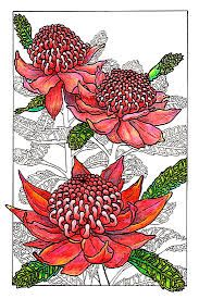 australian flower prints - Google Search