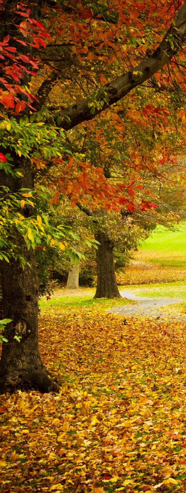 4913 best colores en la naturaleza images on Pinterest | Nature ...
