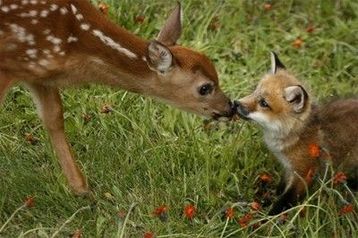 Baby deer + baby fox = melted heart