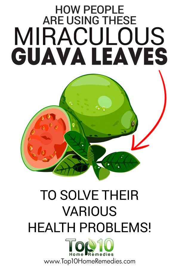 How People are Using These Miraculous Guava Leaves to Solve Their Various Health Problems!