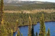 http://www.dinamicambiental.com.br/blog/meio-ambiente/floresta-boreal-caracteristicas/