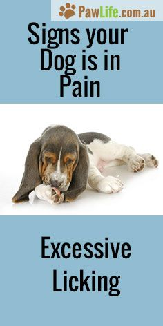 It's never easy seeing your furbaby in pain. Here are 6 common signs your dog is in pain.