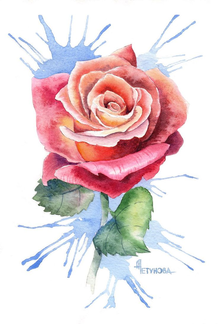 Посмотреть иллюстрацию Анна Петунова - Роза.