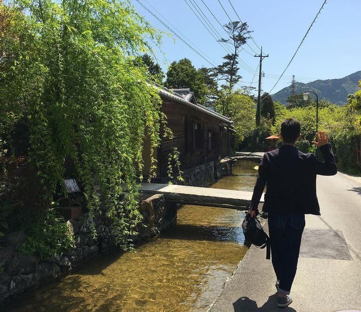 なう旅 秋吉台の後は雰囲気の良さ気な場所を探して城下町の萩市を散歩 この水路には錦鯉も住んでる  #旅#散歩#春#風景#日本#景色 #travel#travelgram#instadaily#japan#landscape#loves_world by konkichi