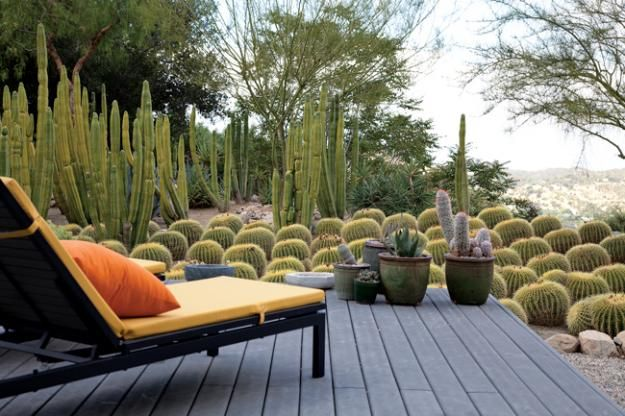 Roy Dowell and Lari Pittman's Cactus Garden in Los Angeles 2 | Garden Design