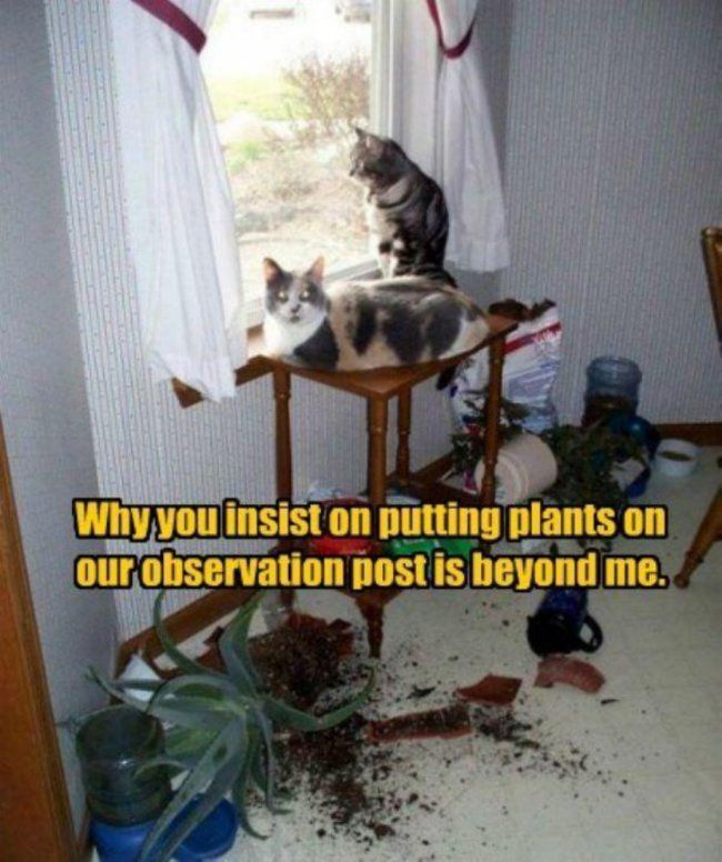 20 Funny Cat Pictures