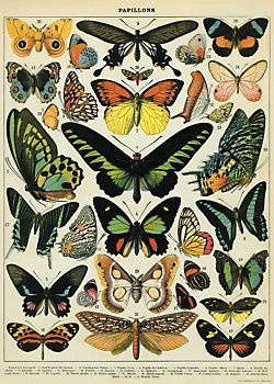 Cavallini Butterflies Wrapping Paper