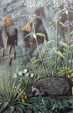 C F Tunnicliffe for Ladybird Books 3