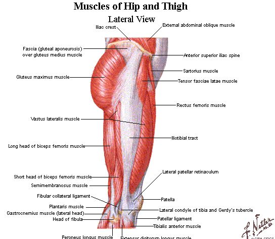 muscles in hip leg and butt | Weak Glutes could destroy the athlete | renssuperawesomepage