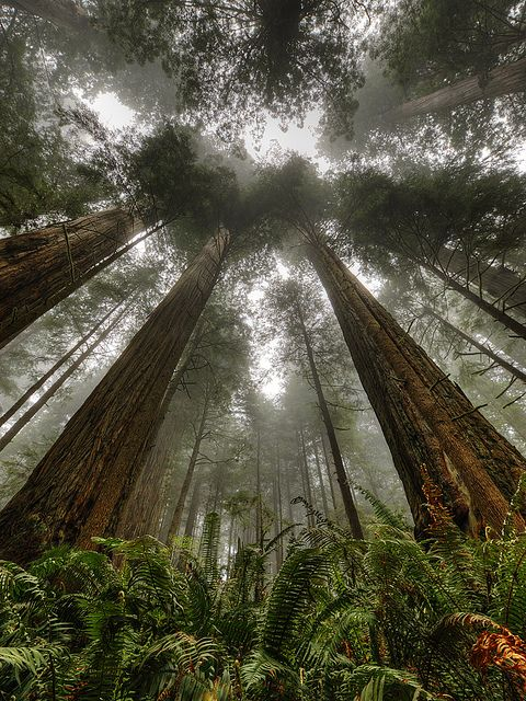Not only is this an awesome park filled with ginormous Redwoods, but it was also a filming location for Star Wars.