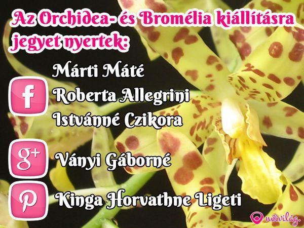 A Pinteresten a jegyet nyerte: Kinga Horvathne Ligeti Kérjük jelentkezz az info@noivilag.hu címen.