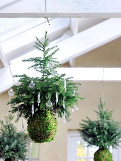 Het is nog een beetje vroeg maar deze vliegende kerstboompjes staan in onze nieuwe agenda voor 2015 en nu dus ook op de site. Kerst hangt in de lucht. Letterlijk en figuurlijk, met geurige, groene zelfgemaakte versieringen. Nodig: • 3 stuks Picea omorika met kluit (Tuincentrum Overvecht) • plaatmos (Tuincentrum Overvecht) • koperbinddraad • stevig touw...