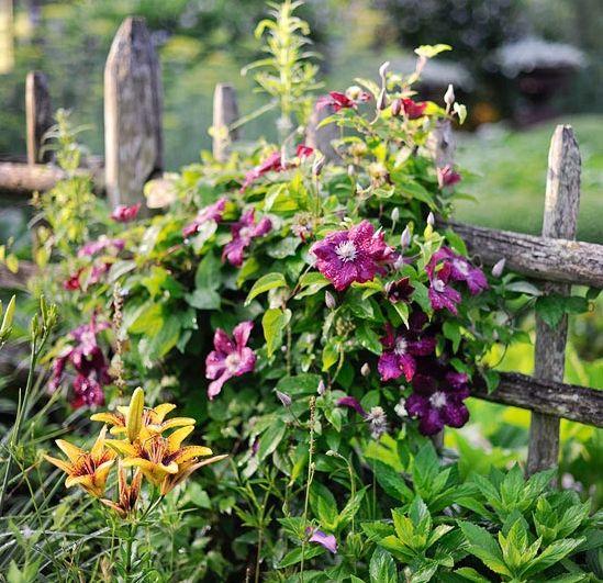 M s de 25 ideas incre bles sobre plantas para cercos en pinterest vallas de jard n de bamb - Plantas para vallas ...