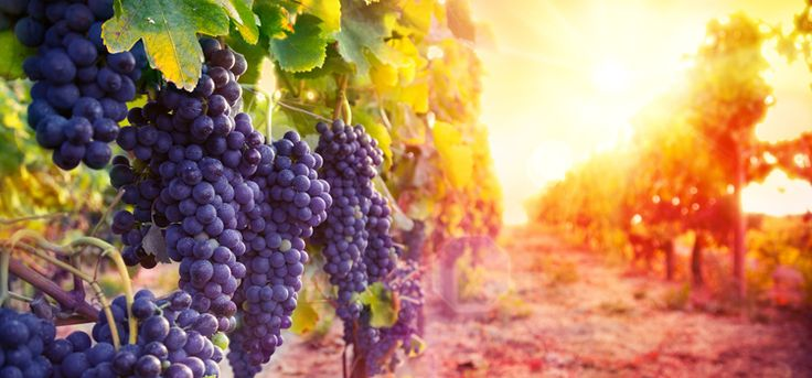 Solar-Powered winery can compete with the best of them | Erthie Education Portal https://www.erthie.com/site/article/153/id-like-my-wine-solar-powered-please#utm_sguid=187838,98bfbf2e-b277-41f3-dc81-2aefc82338eb