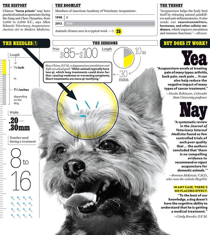 The Rise of Canine Acupuncture -- New York Magazine