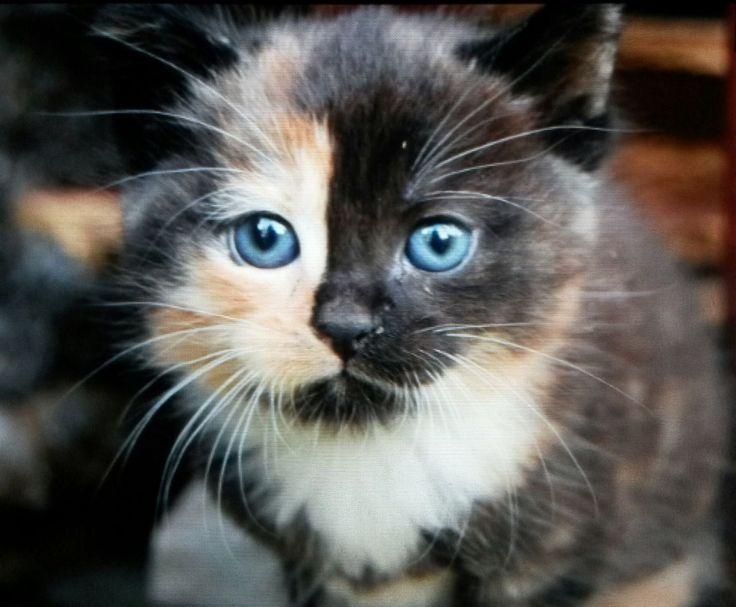 FINN – Søte kattunger