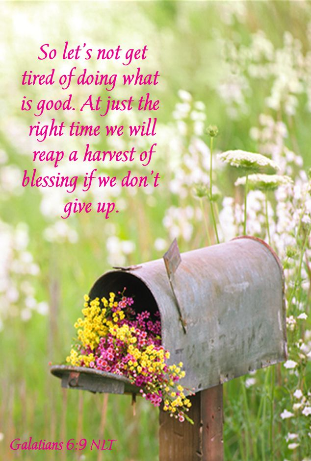 Galatians 6:9 And let us not be weary in well doing: for in due season we shall reap, if we faint not.