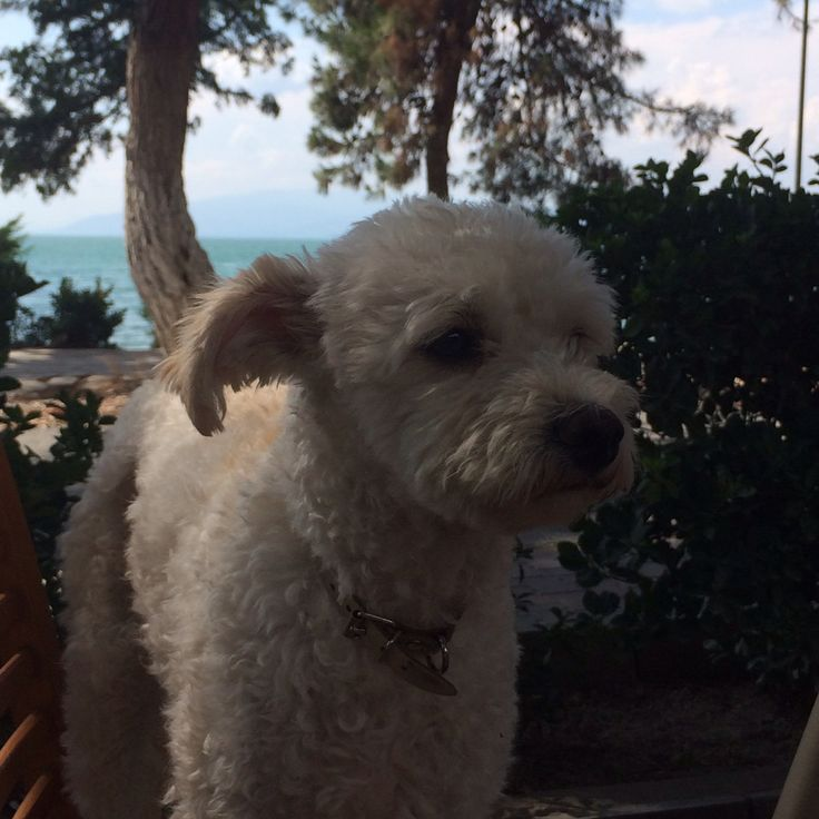 #At the restaurant in #iznik with my dog coco