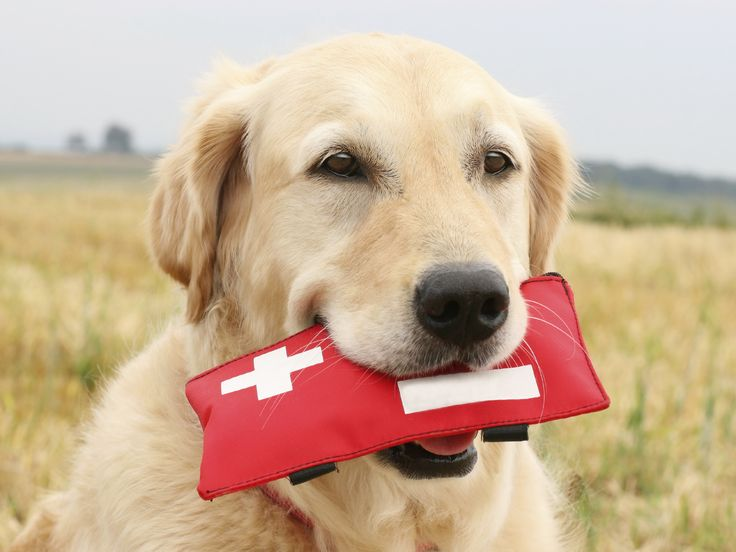 what you need to pack in your pet s first aid kit barrington oaks veterinary hospital
