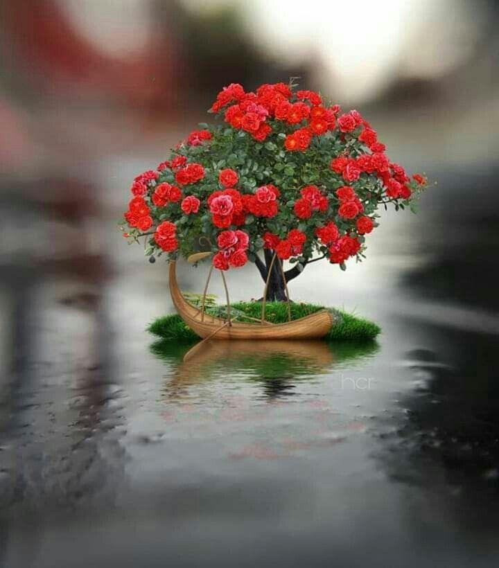 للصباح رونق في نفوس المتفائلين فكونوا منهم حتى تستشعروا روعته صباحكم حلوو مثلكم شيماؤؤ Miniature Photography Cute Photography Flowers