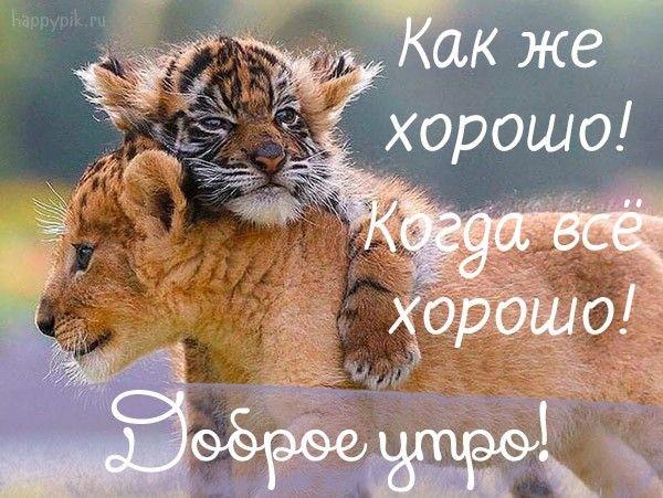 Dobroe Utro Prikolnye Kartinki S Izobrazheniyami Obyatiya